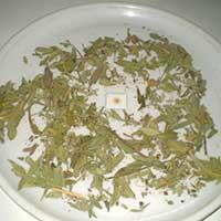 Rasna Leaf {vanda Rxburghi}