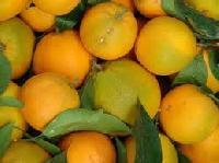 Orange Tangy Flavour