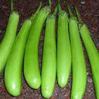 Green Brinjal