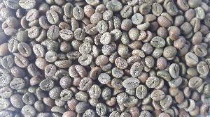 Robusta A Green Coffee Beans