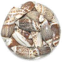 100 Grams White Sea Shells