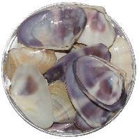 Violet Colour Natural Sea Shells 100 Grams - A1038