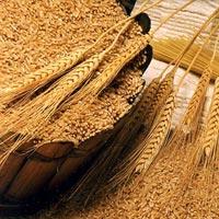 Ground Wheat