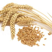 Wheat Grain