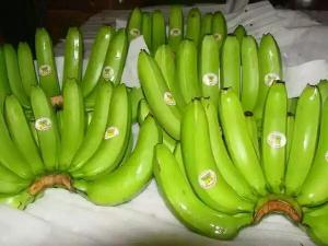 Indian Banana