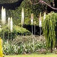 Garden Contractor