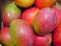 Fresh Kesar Mangoes