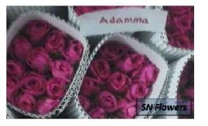 Adamma Cut Rose