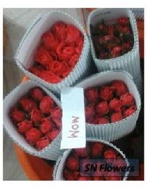 Mom Cut Rose