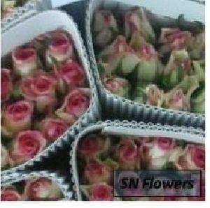 Sovereign Cut Rose