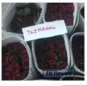 Taj Mahal Cut Rose