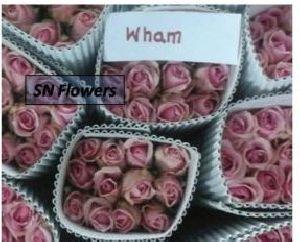 Wham Cut Rose