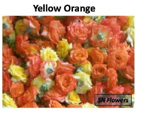 Yellow And Orange Rose