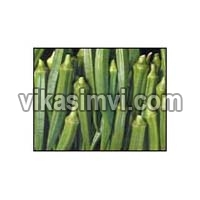 Fresh Okra for Sale