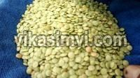 Cheap Green Lentils