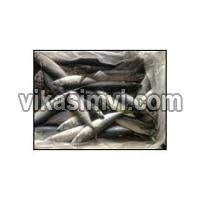 Frozen Atlantic Mackerel Fish