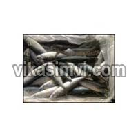 Frozen Atlantic Mackerel(scomber Scombus)