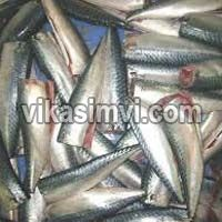 Frozen Hgt Mackerel