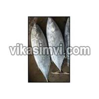 Frozen Yellowfin and Skipjack Tuna Fish