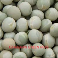 Canadian Green Peas