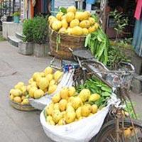 Bainganpalli Mango