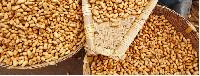 Indian Groundnut Extraction Meal