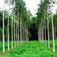 Mogi Plant