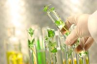 Tissue Cultured Plants