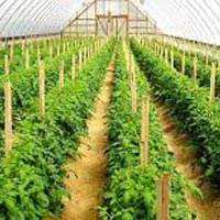 Medicinal Plant Consultancy