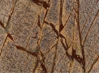 Designer Rainforest Brown Marble Stone