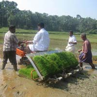 Agricultural Paddy Transplanter