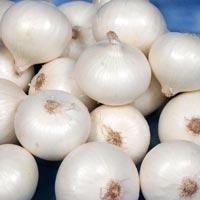 Fresh White Onion