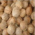 Matured Coconuts