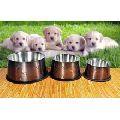 Dog Food Bowls
