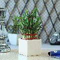 Corporate Gift Ceramic Pot