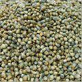 Dried Pearl Millet Seed
