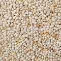 White Millet Seeds