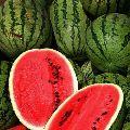 Ripe Watermelon