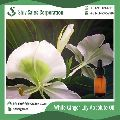 White Ginger Lily Absolute Oil