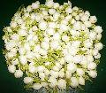 Madurai Jasmine