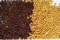 Pure Mustard Seeds