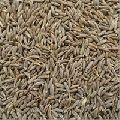 Uncleaned Cumin Seeds