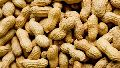 Raw Natural Groundnuts