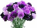 Purple Carnation Flower Bouquet