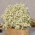 White Gypsophila Flower Bouquet