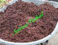 NATURE VISHAL - PottingSoil