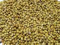 CORIANDER SEED Parrot