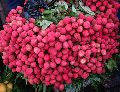 Fresh Red Lychee