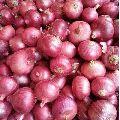 Nashik Red Onion