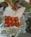 Export Quality Pomegranate